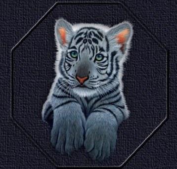 Des belle images de tigre - Tigre blanc dessin ...
